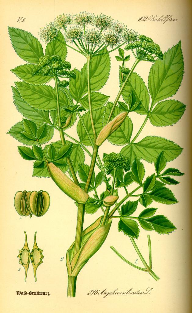 dziegiel-lesny-ziolo-1